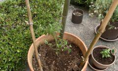 竹を再利用
